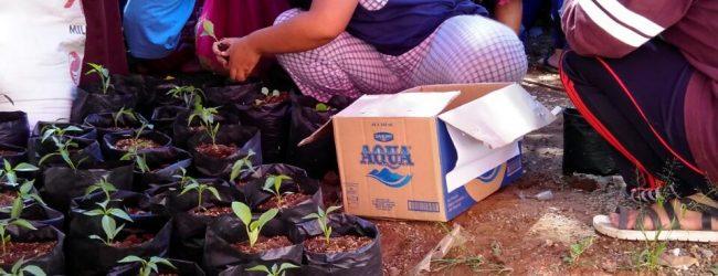 Berdayakan Pemuda Lewat Program KRPL (Kawasan Rumah Pangan Lestari)